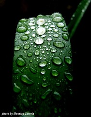 (Messias Correia) Tags: verde green nature water gua drop gotas soe smrgasbord goldenmix cmeradeourobrasil naturewatcher macromix wonderfulworldmix theperfectphotographer