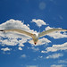 seagull by petervanallen