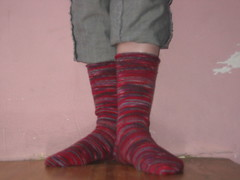 Plain Regia socks