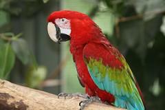 IMG_4859_emmen (Arie van Tilborg) Tags: zoo dieren emmen noorderdierenpark dierentuin mediacollege arievantilborg