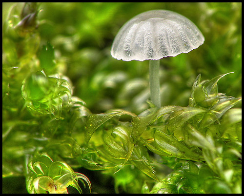 Tiny Toadstool in the Moss