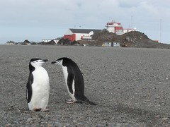 pinguinos (Rapmax) Tags: pinguinos george king jorge rey islan isla base c130 dap aviones frei fokker p47
