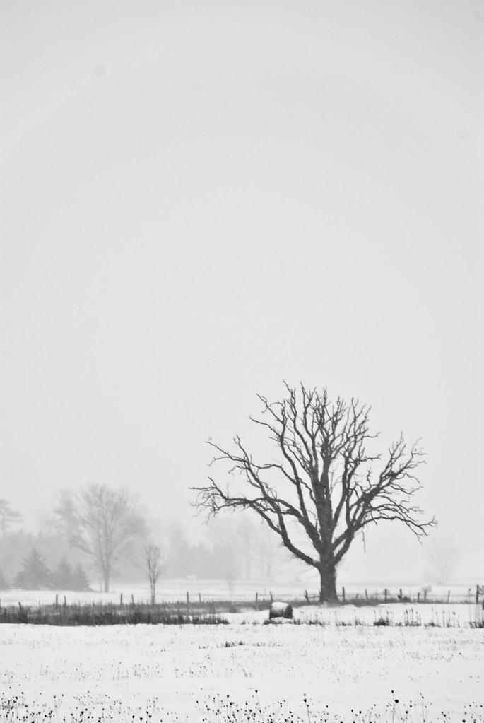 SnowFields-9598.jpg