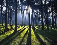 RỪNG (tieuminh1) Tags: hồ thác rừng