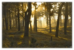 (gRochford) Tags: trees ireland sunset sun tree point woods nikon d70s through dslr raven wexford breaking curracloe diamondclassphotographer theperfectphotographer