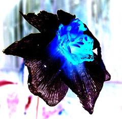 Black and Blue (mightyquinninwky) Tags: rain fence backyard kentucky lexingtonkentucky waterdrops picnik earlyspring chevychase fontaineroad fayettecountykentucky centralkentucky thebluegrassstate