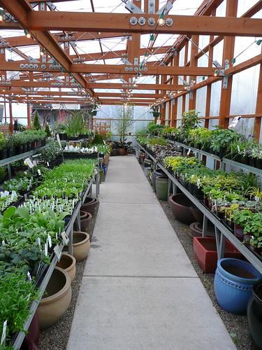 garden fever nursery - Garden Fever