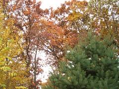 backyard color (jlohun) Tags: color october elkhart picnik