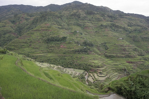 Just Another Rice Terraces