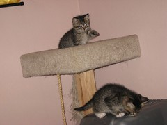 11-24-07 491 (teribul_teri) Tags: cat play kittens cuties