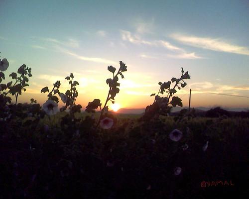 Sunset Berkane