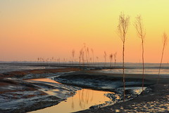 Wremertief (2) (g_heyde) Tags: sunset reflections germany beautifullight worldheritagesite northsea lowtide reflexions nordsee mudflats hdr watt mudflat worldheritage tidelands wattenmeer niedersachsen naturesfinest waddensea goldenglobe blueribbonwinner wremen supershot pricken golddragon 40d mywinners abigfave platinumphoto anawesomeshot colorphotoaward aplusphoto weltnaturerbe diamondclassphotographer flickrdiamond megashot theunforgettablepictures aspect43 aspect1610 colourartaward theperfectphotographer goldstaraward priggen aussenweser iwishidtakenthat damniwishidtakenthat wremertief vanagram colorfullaward wishitookthat