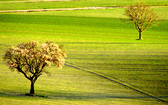 Naif (raffaphoto) Tags: brown green nature landscape spring yinyang soe artisticexpression ourplanet treesubject diamondclassphotographer flickrdiamond