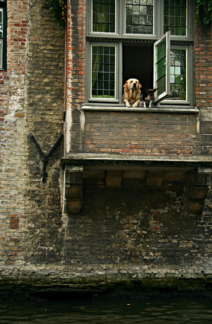 Dogs in Brugges
