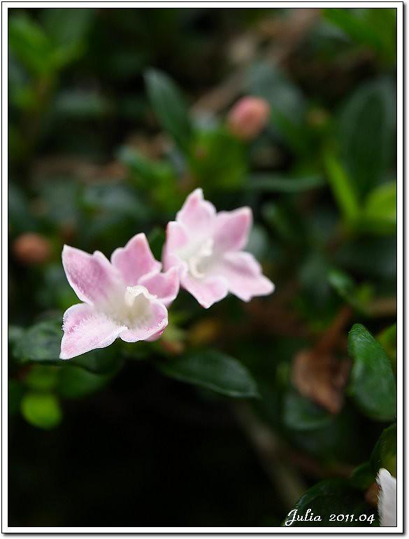 仁山植物園 (26)