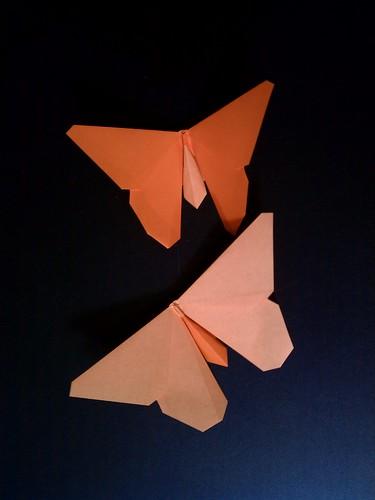 Evangeline Fritillary (Butterfly)