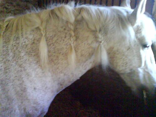 cheval tresses