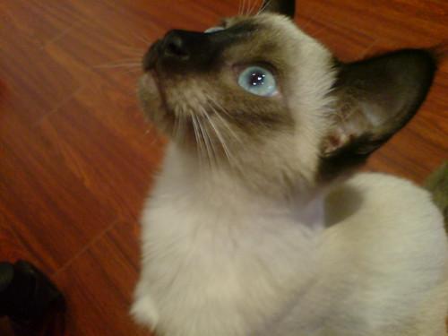 Victoria's kitten