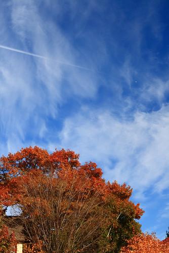 Blue Sky 4186