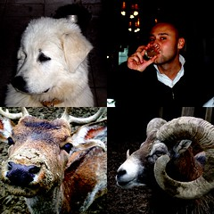 Animals (Master Mason) Tags: dog man animals collage olympus drinkin billygoat babybeef mastermason moilbicchieredalversogiusto