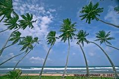 Bentota Beach , sri lanka (dawey [Mohammad Alhameed]) Tags: travel green 20d water asia asien canon20d srilanka ceylon usm dslr mohammad familytrip globalvillage sandisk 2007 eos20d compactflash bentota mohanad voluntary  yousef mohamad canonefs1022mmf3545usm canon1022mm picturecollection conon vwc    globalcity
