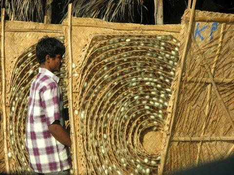 Silkworm pupae kanakapura road galibore 161207 S3