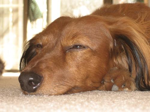 Lulu snoozes