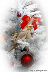 Рождественские поздравления от Jules, Michael & корицей!