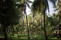 Theosophical Society (Jennifer Kumar) Tags: india madras parks serenity negativescan chennai tamilnadu adyar theosophicalsociety india1998 india1999