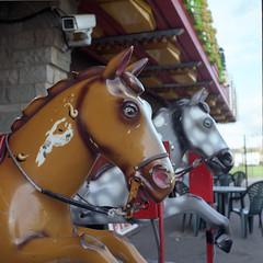 Fantasy Island (luns_spluctrum) Tags: uk sea england horses 120 6x6 tlr film rollei mediumformat square island casino medium format essex rolleicord portra160vc canveyisland canvey rolliecord canveyonsea