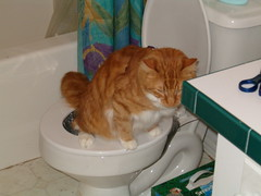toilet training cat