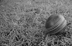 Cricket ball on turf ([ Kane ]) Tags: blackandwhite art ball australia cricket qld kane cricketball gledhill kanegledhill humanhabits wwwhumanhabitscomau kanegledhillphotography