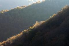 (Ibon M.) Tags: forest bosque foret navarra basoa nafarroa basaburua