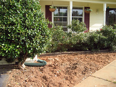 digging perennial bed