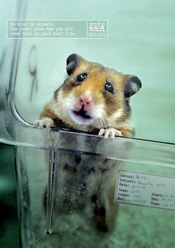 GAIA - Hamster