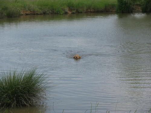Waterdog.