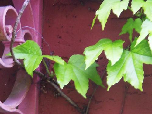 Rotgrün im Mehr