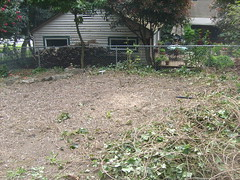 S7300610 (pieisexactlythree) Tags: home yard garden weeds blackberry ivy patio