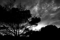 . (Cracas) Tags: sunset bw tree portugal silhouette vtor cracas