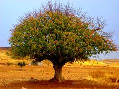Tree (kezwan) Tags: tree nature 1on1 kezwan