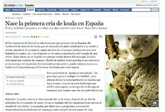MY KOALA PHOTO IN THE NEWSPAPER (danihernanz) Tags: madrid nightpictures urbanpictures streetpictures artisticpictures danihernanz danielhernanz animalspictures moodpictures danielhernanzfotografodemadrid animalsphoto mountainspictures ambientpictures lasmejoresfotosdemadrid artisticanimalpictures allrightsreservedinallmypicturesdontusewithoutmypermission copyrightdanihernanz fotosartsticasdemadrid fotosdemadridenblancoynegro blackandwhiteurbanpictures amazingurbanpictures fotografodeanimalsdanihernanz amazinganimalpictures agressiveanimalpictures animaldetailpictures animalsfacetoface closeupanimalpictures thebestpicturesofanimals beautifullandscapespictures ambiancepictures pictureswithatmosphere