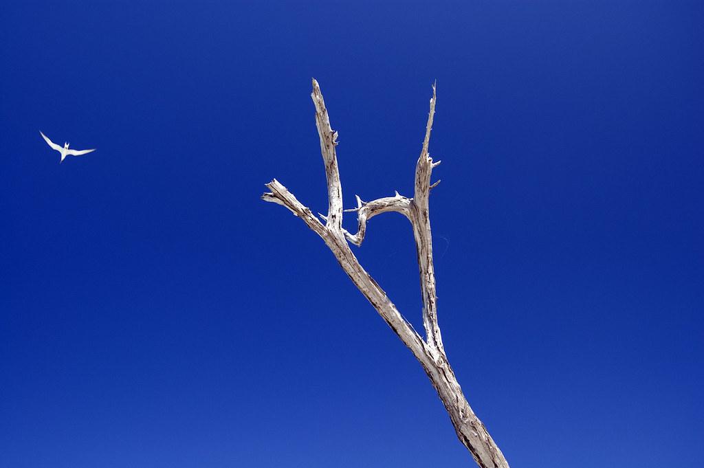 Tern and Tree