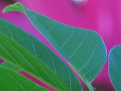 green in violet series #3