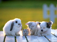deck party (je taime oh moi je taime) Tags: rabbit bunny bunnies puppy puppies kitten kittens hamster rabbits hamsters