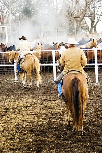 gathering mares 210