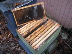 Beekeeping 2717