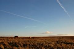 Unconfined (That bloke) Tags: sky clouds mare sheep ponies moor contrails brendon moorland exmoor foal exmoorponies