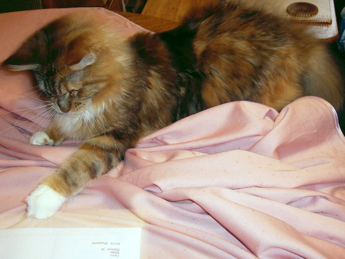Luna hasst Tischdecken