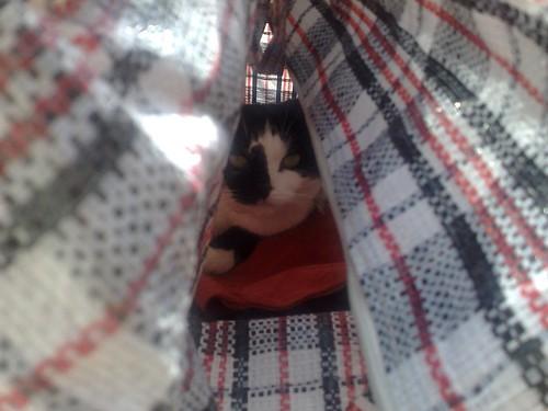 Tiggy hiding