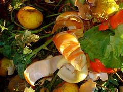 Still life on composter (allispossible.org.uk) Tags: life stilllife color colour rotting vegetables fruit still rubbish colourful stillife refuse farbig couleur composting composter